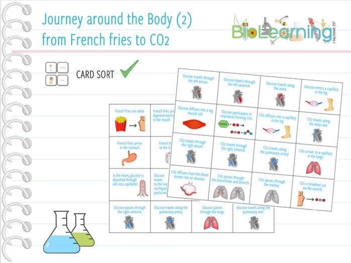 Journey around the body (2): from French fries to CO2 - Card sort (KS3/KS4)