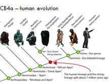 CB4a Edexcel 9-1- Human evolution  - Lesson 3