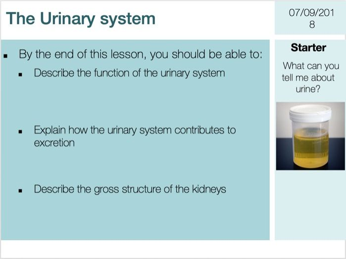 The Urinary System Complete Lesson (GCSE 9-1)
