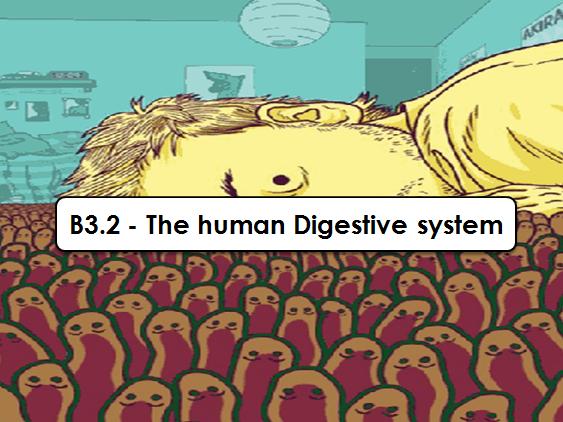 B3.2 - Human Digestive System (GCSE AQA 9-1)