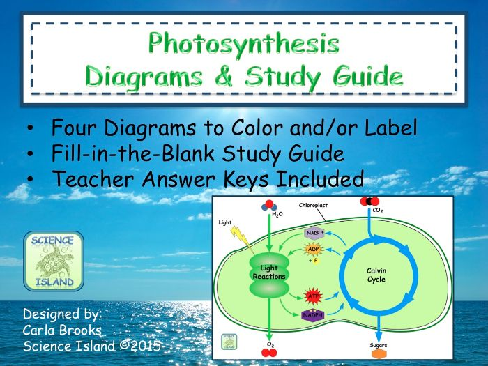 Photosynthesis Diagrams and Study Guide by Scienceisland – Photosynthesis Diagram Worksheet Answers