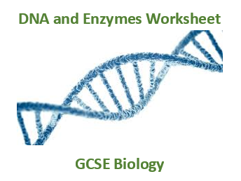 GCSE Biology DNA and enzymes worksheet