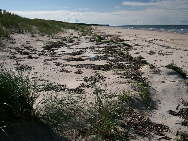 Sand Dune Environments and Ecology: Photo Collection