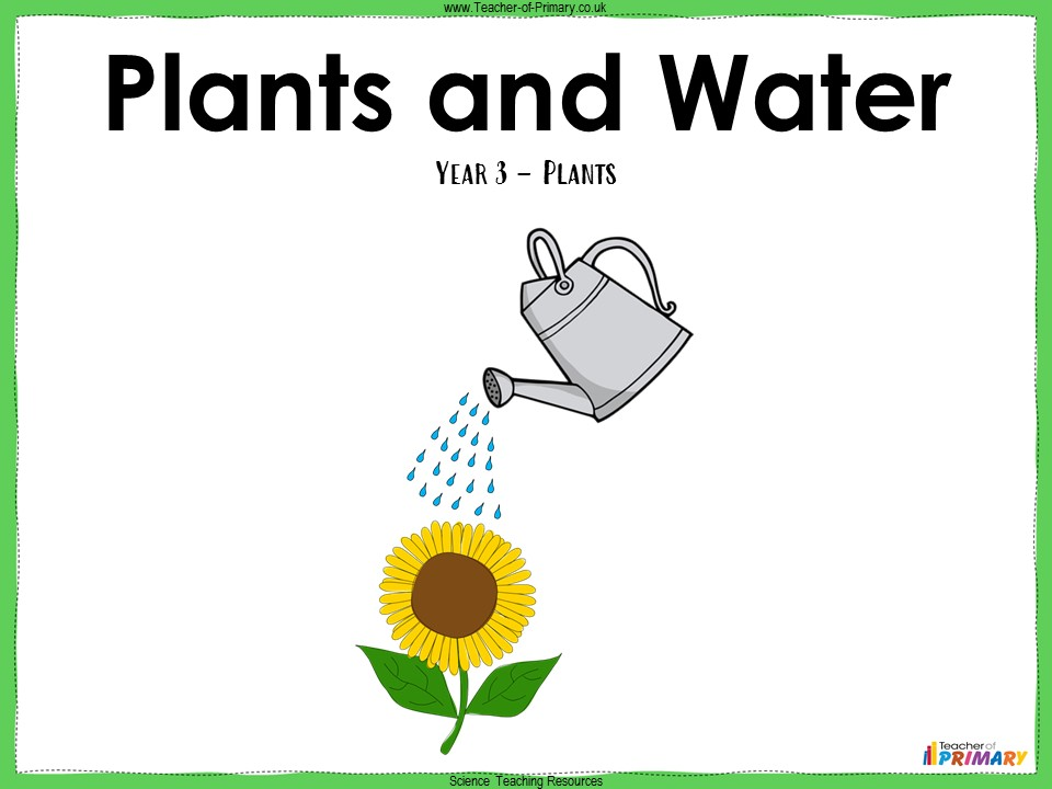 Plants and Water - Year 3