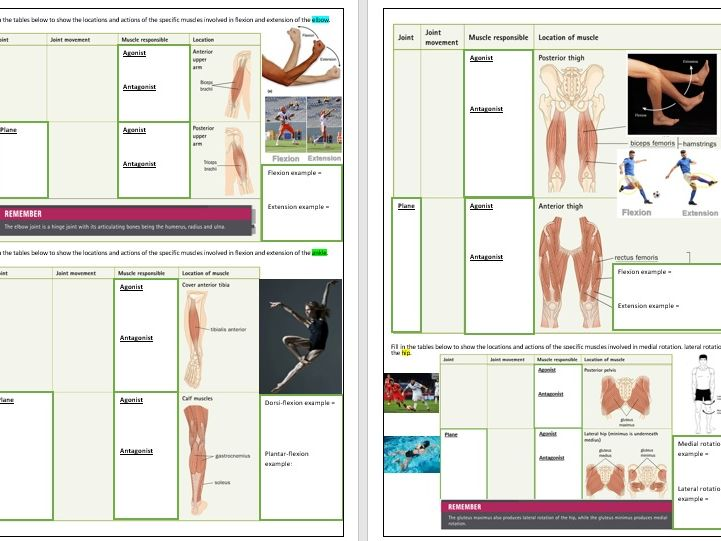 OCR A Level PE - Anatomy and Physiology ILT1 - Muscular Skeletal System