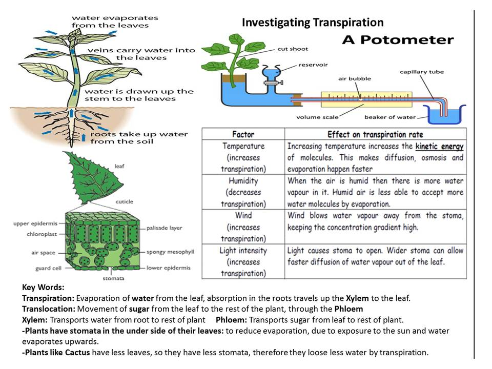 Photosynthesis and Transpiration Review GCSE 9-1
