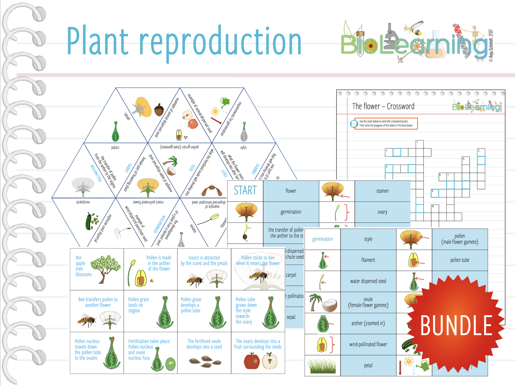 Flowering plant reproduction - 4x Games and activities (KS3)