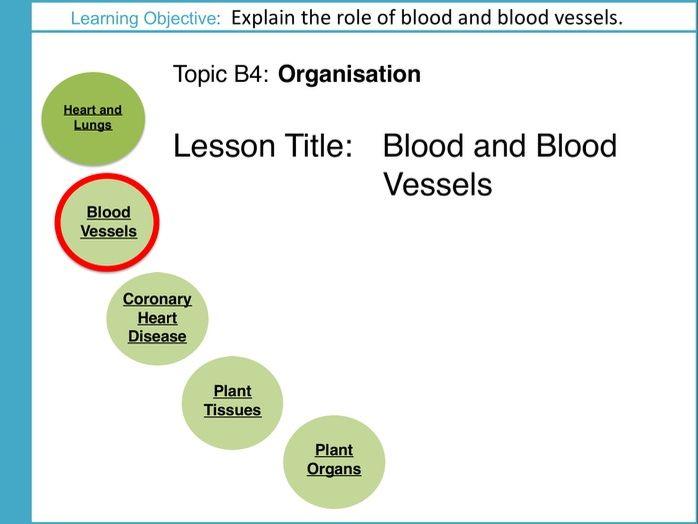 AQA GCSE: B4 Organisation: L2 Blood and Blood Vessels