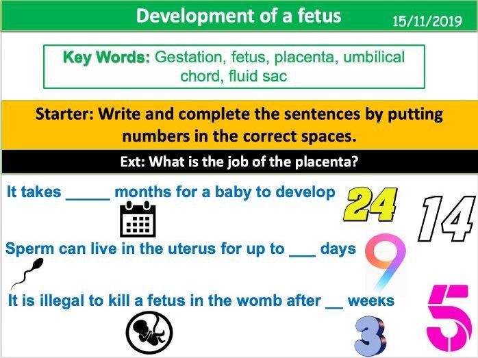 Development of a Fetus