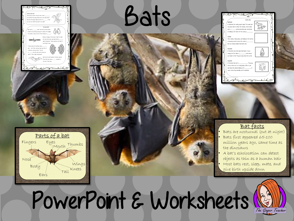 Bats Lesson PowerPoint and Worksheets