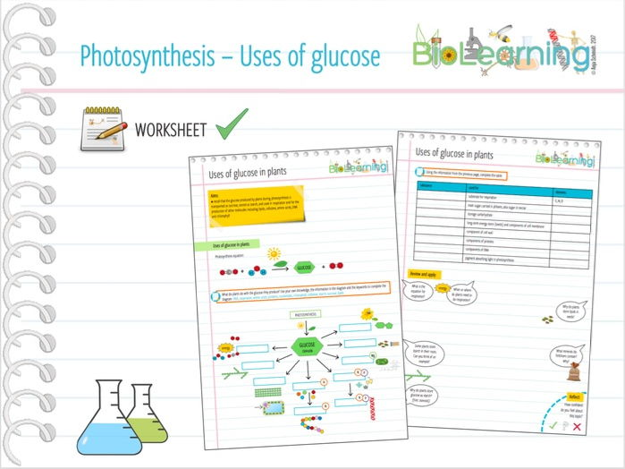 photosynthesis uses of glucose worksheet ks3 ks4 by anjacschmidt teaching resources. Black Bedroom Furniture Sets. Home Design Ideas
