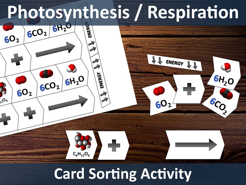 Photosynthesis/Respiration Card Sort