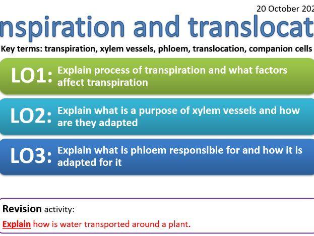CB6d - Transpiration and translocation - transpiration, xylem, phloem, translocation, companion cell