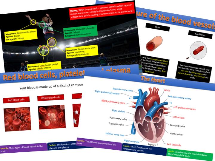 Cardiovascular System - GCSE PE Edexcel (9-1)