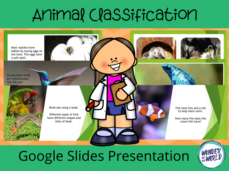 Animal classification Google Slides presentation KS1