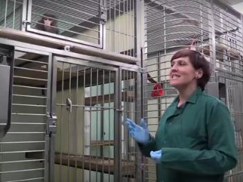 Training lab monkeys