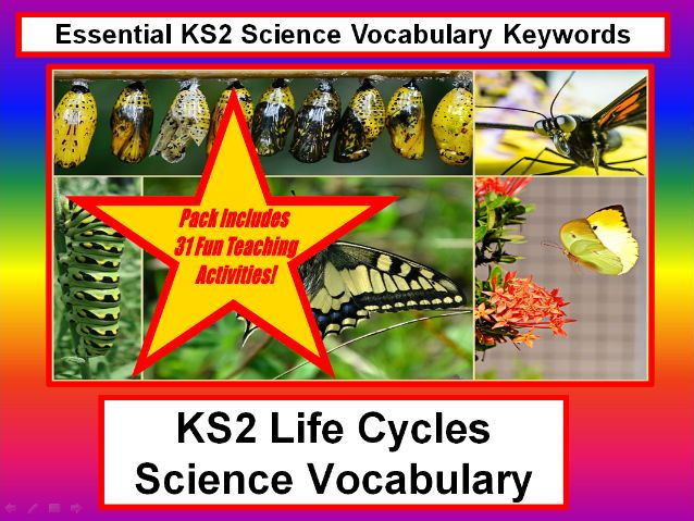 KS2  Life Cycles Science Vocabulary + Flashcards + 31 Fun Teaching Ideas To Try In The Classroom!