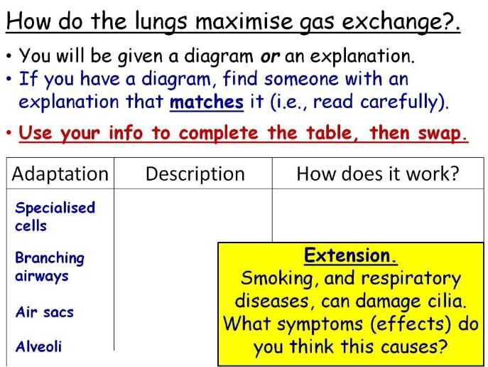 Gas Exchange in the Lungs Year 8 Lesson PowerPoint (KS3 8Cb) Breathing and Respiration topic