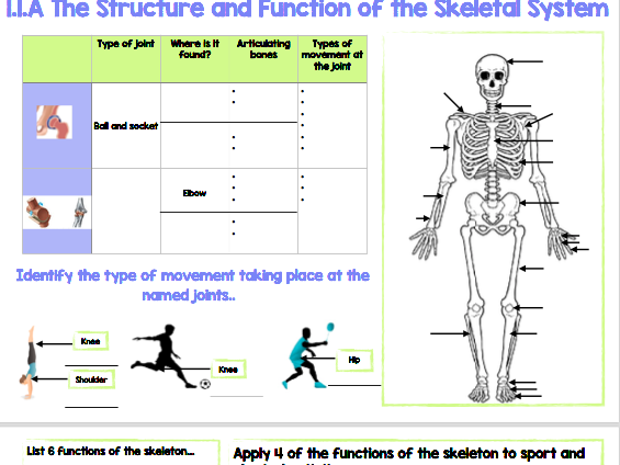GCSE PE - Revision Mat - OCR - 1.1A The Structure and Function of the Skeletal System