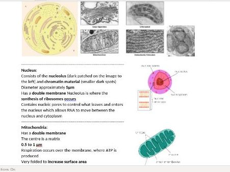 Full Edexcel Topic 3 Revision Notes - Voice of the Genome