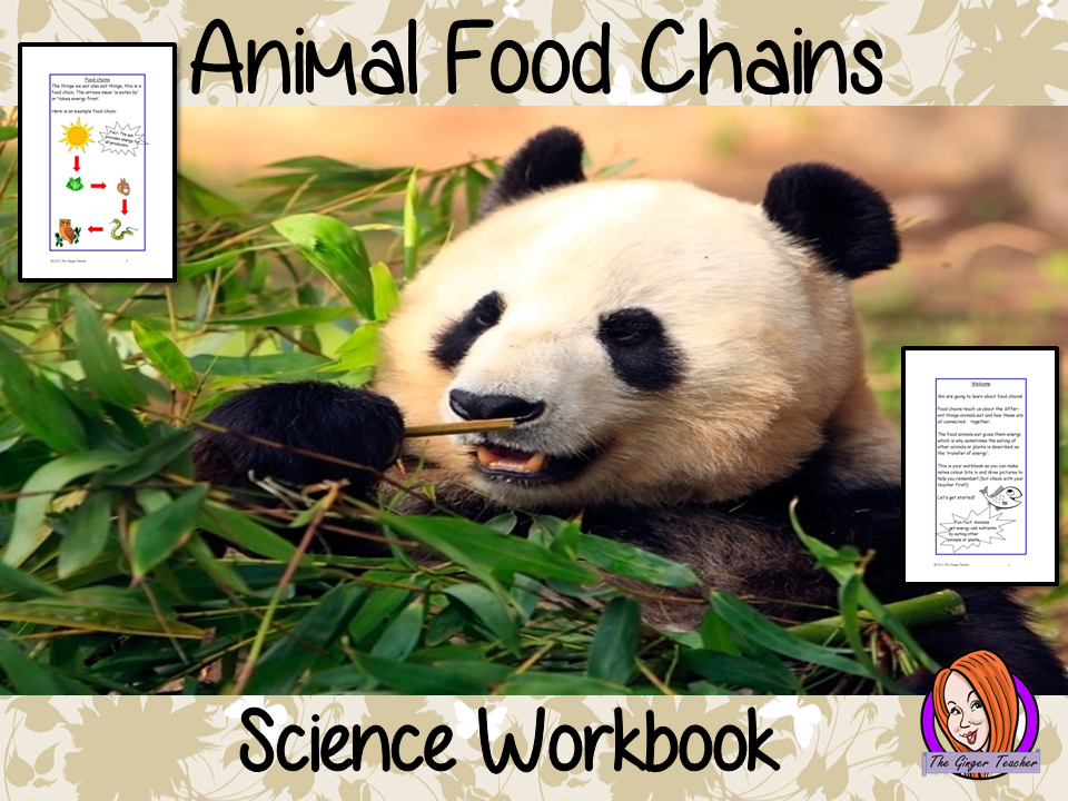 Science, Animals Including Humans, Food Chains STEAM Workbook