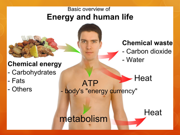 BTEC L3: Unit 5 - Anatomy and Physiology
