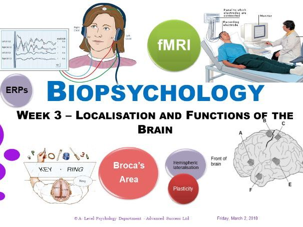 Powerpoint- Biopsychology -  Lesson 3 - Localisation of the Functions of the Brain