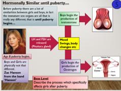 KS4 B11.5 Human Reproduction