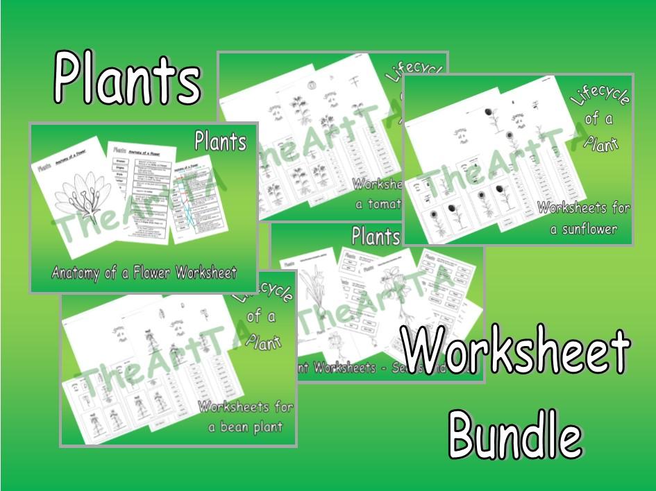 Plants worksheet bundle, Lifecycle, Plant, Flower