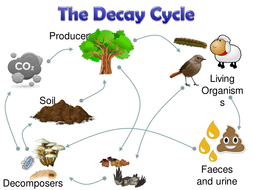 Decay and Decomposers [NEW SPEC AQA] 2020/2021