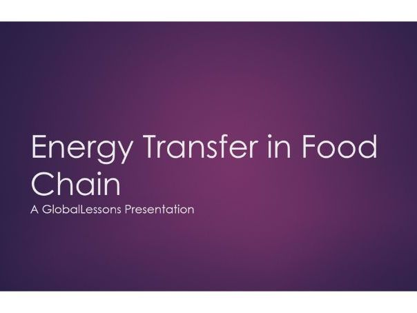 Energy Transfer in the Food Chain FREE