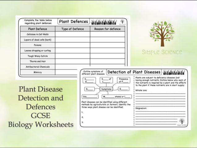 GCSE Biology - Plant Disease Detection and Defences  (Triple) Worksheets