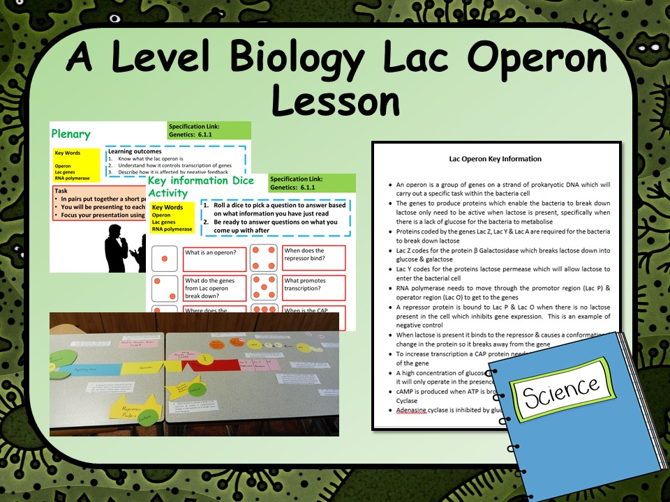 A Level Biology Lac Operon Lesson