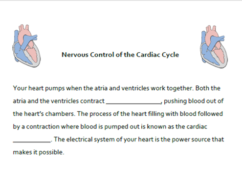 A&P CV System: Nervous Control of the Cardiac Cycle Cloze