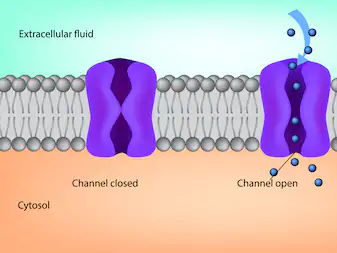 Chapter 5 Plasma Membranes