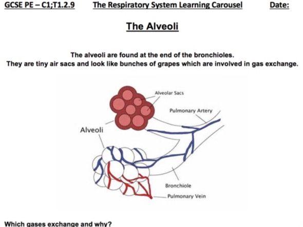 Gcse pe edexcel bundle 16 lessons anatomy physiology by gcse pe edexcel bundle 16 lessons anatomy physiology by robdav999 teaching resources tes ccuart Gallery