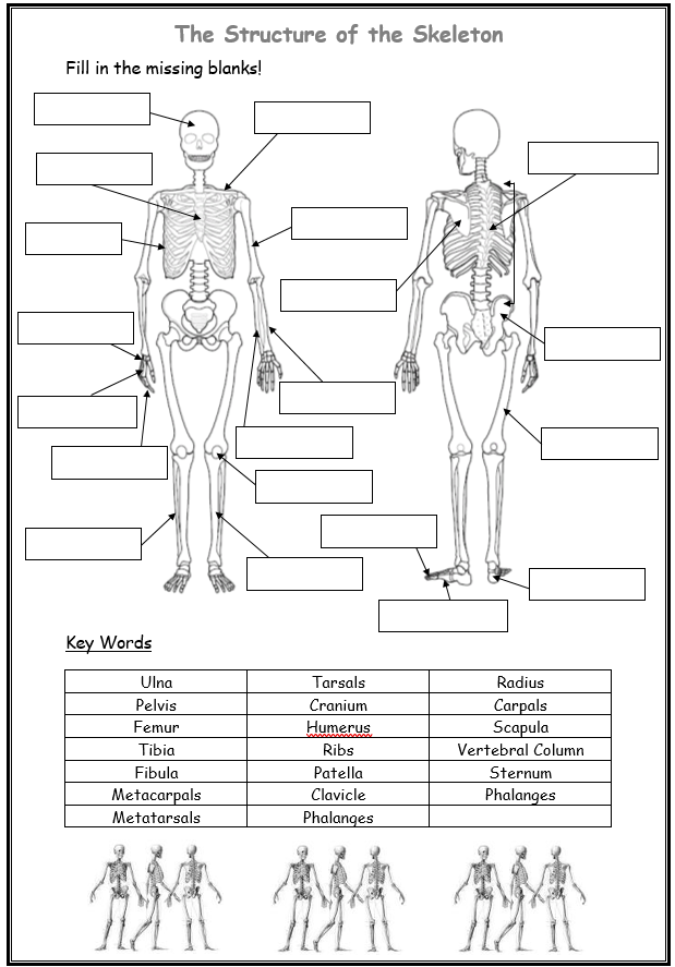 34 Blank Skeleton To Label - Labels For You