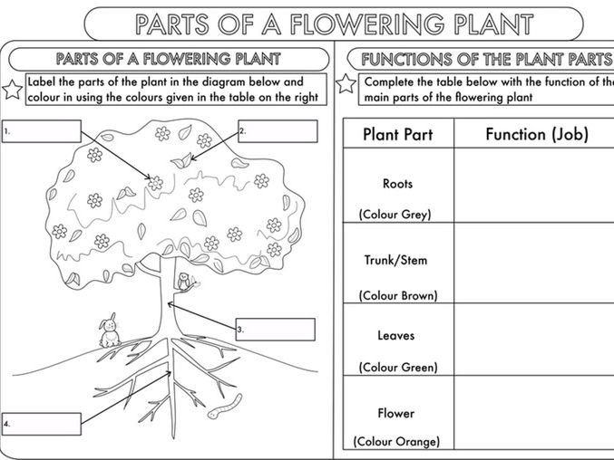 Science Bundle Living Processes for Years 3 and 4 by beckystoke – Parts of a Plant Worksheet