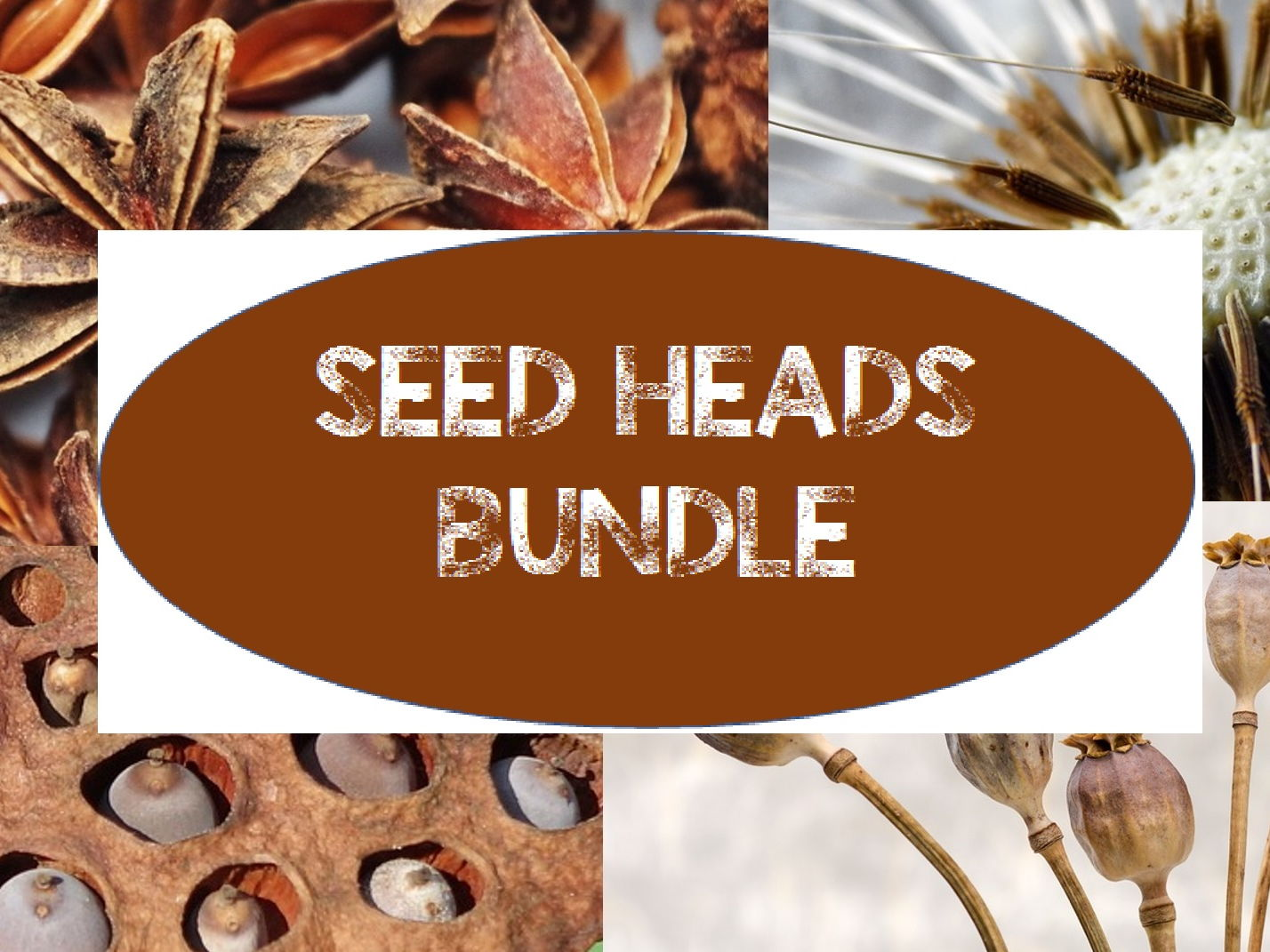 Seed Heads Natural Forms Bundle.