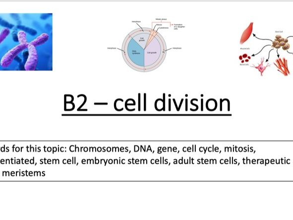 B2 - cell division revision foundation