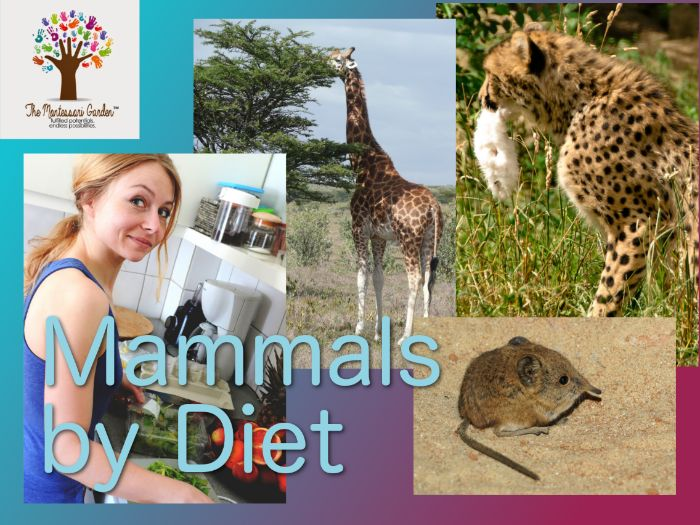 Montessori Classification: Mammals by Diet