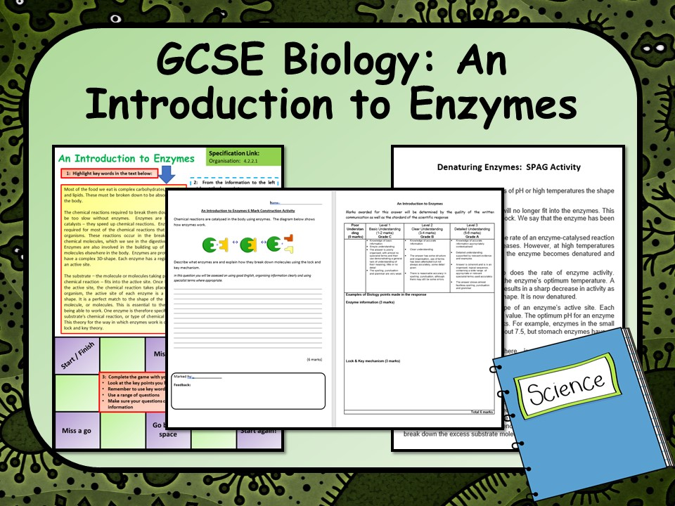 AQA GCSE Biology (Science) Introduction to Enzymes Lesson   Teaching Resources