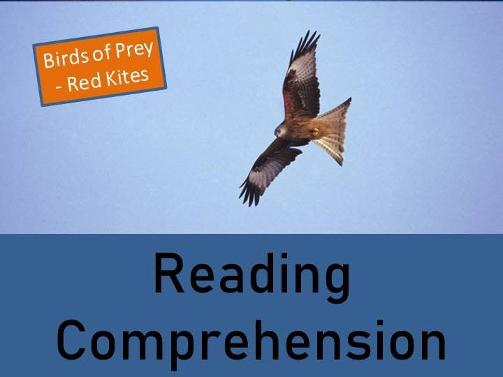 Birds of Prey - Red Kites Years 5-7 Reading Comprehension Activity