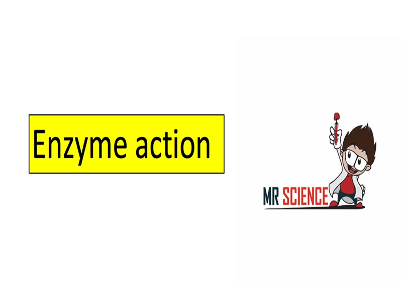 Enzyme action video