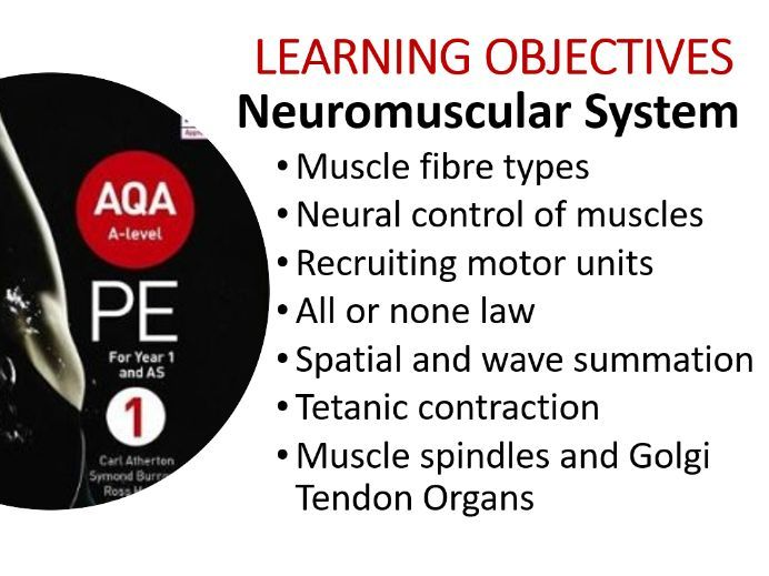 A Level NEW - Neuromuscular System PPT