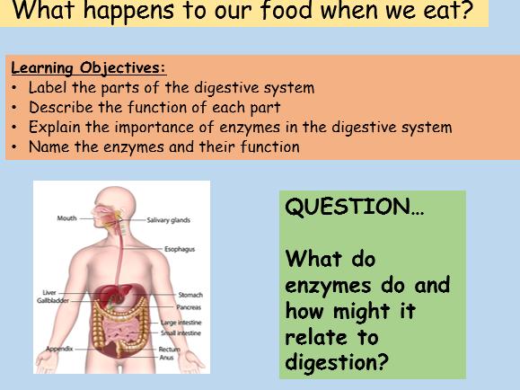 Digestive System GCSE Full Lesson