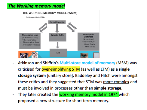 Edexcel A level psychology Working memory model