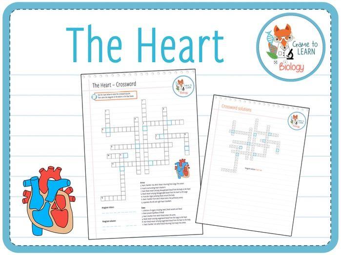 The Heart - Crossword Puzzle (KS3/4)