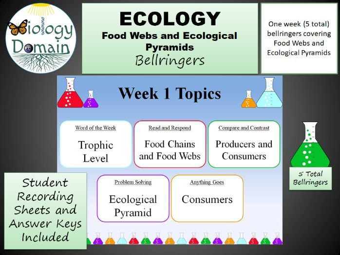 One Week of Food Web and Ecological Pyramid Bellringers Warm Ups with Answer Key
