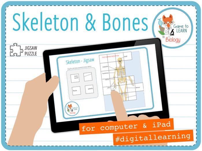 Skeleton and Bones - Digital Jigsaw Puzzle (KS2/3)